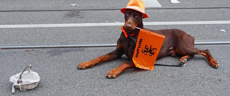 De Koningsdag-Route: Oranje zijn op de leukste feestjes