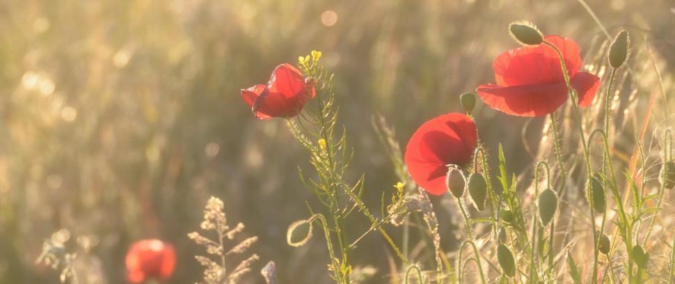 De Romantische-Route: Voor de stelletjes